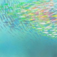 ''Fish nr1'' 25x25cm acrylic on bristol